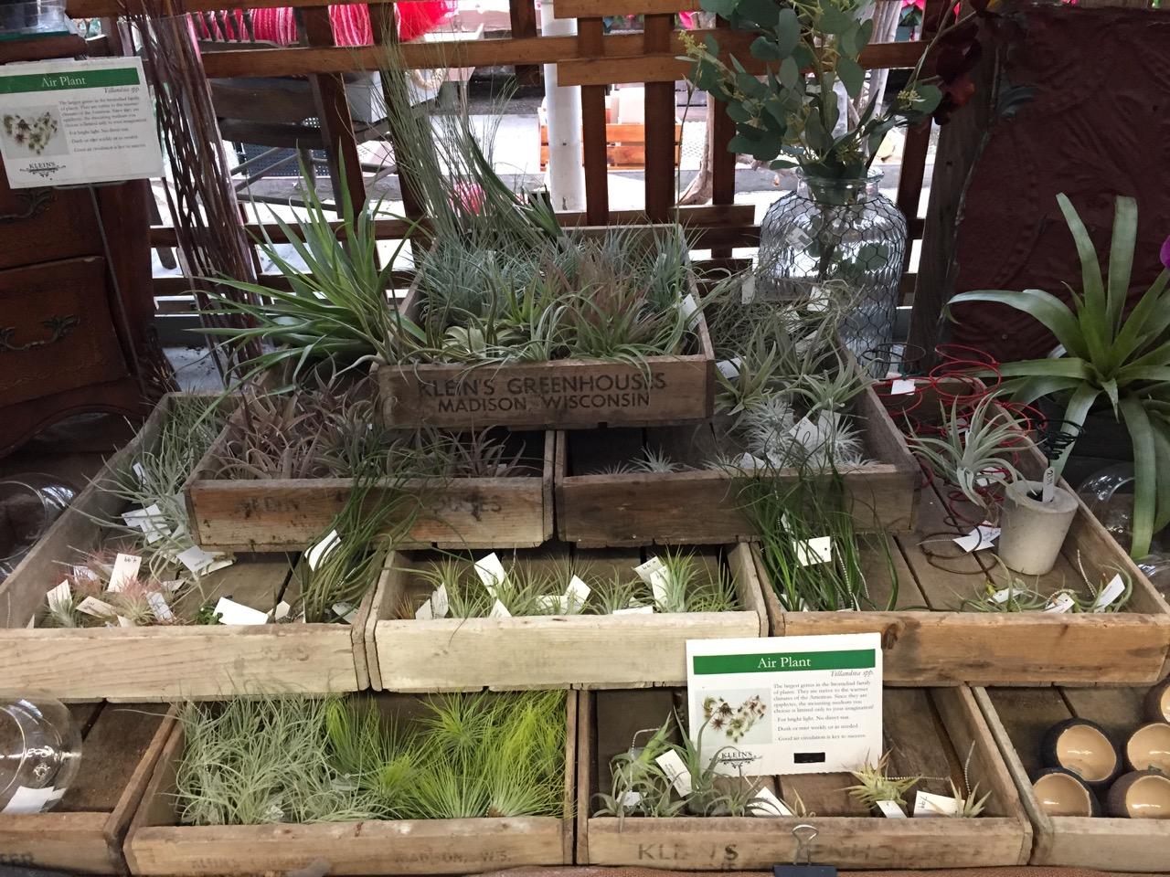 Best House Plants Amazing Indoor Houseplants On Indoor